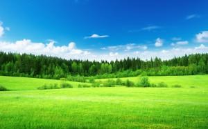 green-fields-hd-pictuers